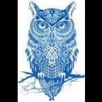 Minerva N. Owl